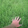 The Most Powerful Tool for a Remarkable Lawn!